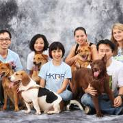 Hong Kong Dog Rescue (HKDR)